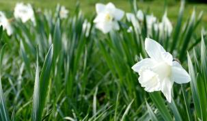 How the Spring Statement affects contractors